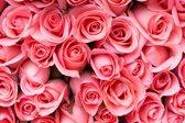 Fotobehang 7 Banen Digitale druk - Roze rozen - Speciaal Fotobehang materiaal - Art. 97381