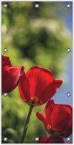 Tuinposter Rode Klaproos 100x200cm- Foto op Tuinposter (wanddecoratie voor binnen en buiten)