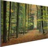 Een bospad in de herfst Aluminium 30x20 cm - klein - Foto print op Aluminium (metaal wanddecoratie)