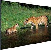 Moeder en welp in water Aluminium 90x60 cm - Foto print op Aluminium (metaal wanddecoratie)