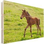 Een wandelend paard in een weiland Vurenhout met planken 80x60 cm - Foto print op Hout (Wanddecoratie)