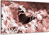 Schilderij | Canvas Schilderij Bloemen, Vlinder | Bruin, Rood, Zwart | 140x90cm 1Luik | Foto print op Canvas