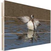 Mannelijke smient toont de witte borst op het water Vurenhout met planken 90x60 cm - Foto print op Hout (Wanddecoratie)