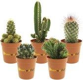 Desertworld Mini Cactus Mix P6 - 5 Stuks + Terracotta Potjes