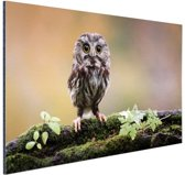 Kleine uil Aluminium 90x60 cm - Foto print op Aluminium (metaal wanddecoratie)