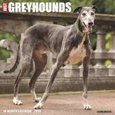 Just Greyhounds 2019 Wall Calendar (Dog Breed Calendar)