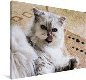 Prachtige Exotic kitten liggend op de vloer Canvas 180x120 cm - Foto print op Canvas schilderij (Wanddecoratie woonkamer / slaapkamer) / Huisdieren Canvas Schilderijen XXL / Groot formaat!