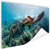 Twee zeeschildpadden Poster 60x40 cm - Foto print op Poster (wanddecoratie)
