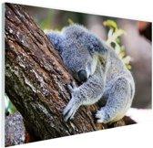 Slapende koala Glas 30x20 cm - Foto print op Glas (Plexiglas wanddecoratie)