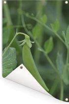 Een peultje vol in bloei Tuinposter 80x120 cm - Tuindoek / Buitencanvas / Schilderijen voor buiten (tuin decoratie)