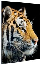 Portret Siberische tijger Aluminium 60x90 cm - Foto print op Aluminium (metaal wanddecoratie)