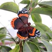 Vlindermagneet atalanta - set van 2 stuks