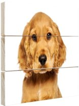 Close-up van een puppy Hout 60x40 cm - Foto print op Hout (Wanddecoratie)