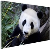 FotoCadeau.nl - Etende panda Glas 120x80 cm - Foto print op Glas (Plexiglas wanddecoratie)