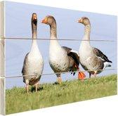 Grauwe ganzen Hout 120x80 cm - Foto print op Hout (Wanddecoratie)