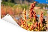 De rode quinoa plant in de natuur Tuinposter 90x60 cm - Tuindoek / Buitencanvas / Schilderijen voor buiten (tuin decoratie)