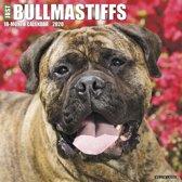 Bullmastiff Kalender 2020