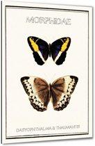 Morphidae - Vlinders - 40x60 cm - Anne Waltz - PixaPrint - WE-0037-1