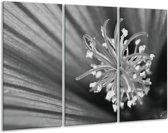Schilderij | Canvas Schilderij Bloem | Zwart, Grijs, Wit | 120x80cm 3Luik | Foto print op Canvas