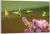 Plexiglas – Drie Gele Vlinders– 120x80 (Wanddecoratie op Plexiglas)
