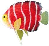 Nobby Angelfish - Oranje - Glow In The Dark - 11 x 9,5 cm