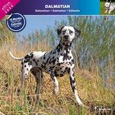 Dalmatier Kalender 2020