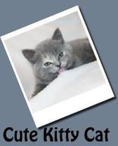 Cute Kitty Cat (Journal / Notebook)