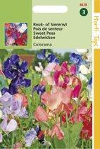 Hortitops Zaden - Lathyrus multiflora Colorama gemengd