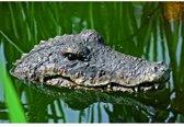 Krokodil drijvend - set van 2 stuks