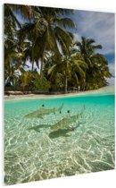 Tropische haaien Glas 60x90 cm - Foto print op Glas (Plexiglas wanddecoratie)