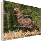 Steenarend zit op een hooibaal Vurenhout met planken 60x40 cm - Foto print op Hout (Wanddecoratie)