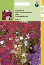 Hortitops Zaden - Phlox Nana Compacta Beauty Gemengd