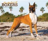 Boxers, for the Love of 2020 Deluxe Foil