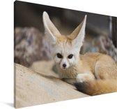 Fennek vos ligt op de grond en kijkt recht in de camera Canvas 60x40 cm - Foto print op Canvas schilderij (Wanddecoratie woonkamer / slaapkamer) / Wilde dieren Canvas Schilderijen