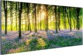 Kleurrijke bloemen in het bos Aluminium 90x60 cm - Foto print op Aluminium (metaal wanddecoratie)