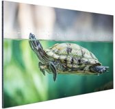 Close-up foto van schildpad Aluminium 90x60 cm - Foto print op Aluminium (metaal wanddecoratie)