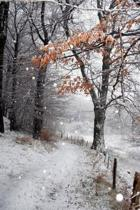 Danish Winter Journal