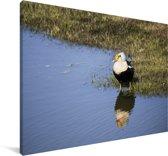 Een eider aan de rand van het water Canvas 140x90 cm - Foto print op Canvas schilderij (Wanddecoratie woonkamer / slaapkamer)
