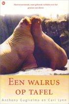 Een walrus op tafel