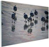 FotoCadeau.nl - Meeuwen in het water Glas 90x60 cm - Foto print op Glas (Plexiglas wanddecoratie)