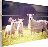Moeder met lammetjes in weiland Hout 30x20 cm - klein - Foto print op Hout (Wanddecoratie)