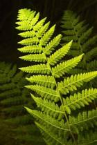 The Green Fern Journal