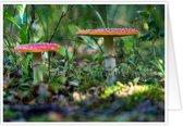 Bijzondere wenskaarten met exclusieve natuurfoto's - Paddenstoelen