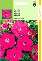 Petunia Hemelroosje - Petunia nana compacta - set van 8 stuks