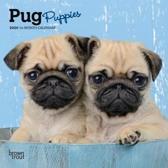 Pug Puppies 2020 Mini 7x7