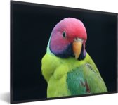 Foto in lijst - Kleurrijke portretfoto van een pruimekopparkiet fotolijst zwart 40x30 cm - Poster in lijst (Wanddecoratie woonkamer / slaapkamer)