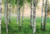 W+G Behang Ideal Decor Mural Nordic forest