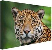 Close-up luipaard  Canvas 120x80 cm - Foto print op Canvas schilderij (Wanddecoratie woonkamer / slaapkamer) / Dieren Canvas Schilderij