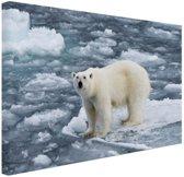Ijsbeer op Spitsbergen Canvas 80x60 cm - Foto print op Canvas schilderij (Wanddecoratie)