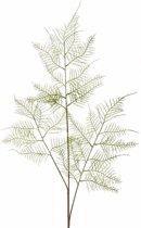 Kunstplant aspergeplant tak 80 cm groen
